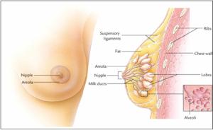 gejala-kanker-payudara